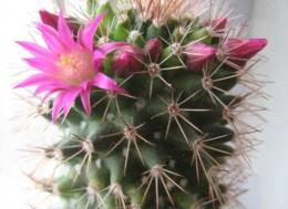 Как цветет кактус, полное голодание, абсолютное голодание.