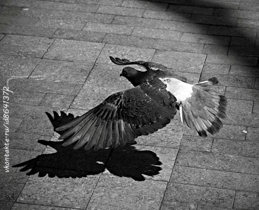 Русские хайку, Russian haiku, Flight from Freedom