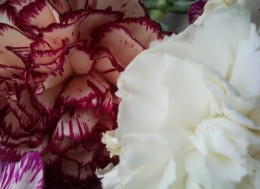 Мои стихи хокку, мои стихи хайку, красивые цветы.