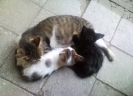 Советы по улучшению сна, кошка с котятами, Tips for better sleep