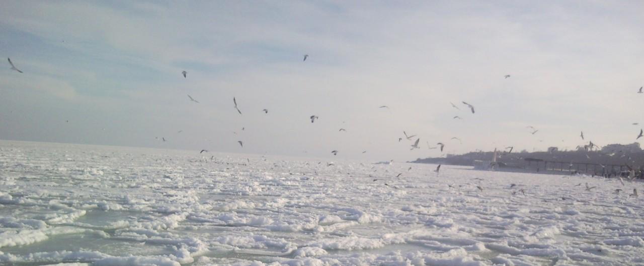 Чайки на замерзшем черном море, кормление птиц зимой.