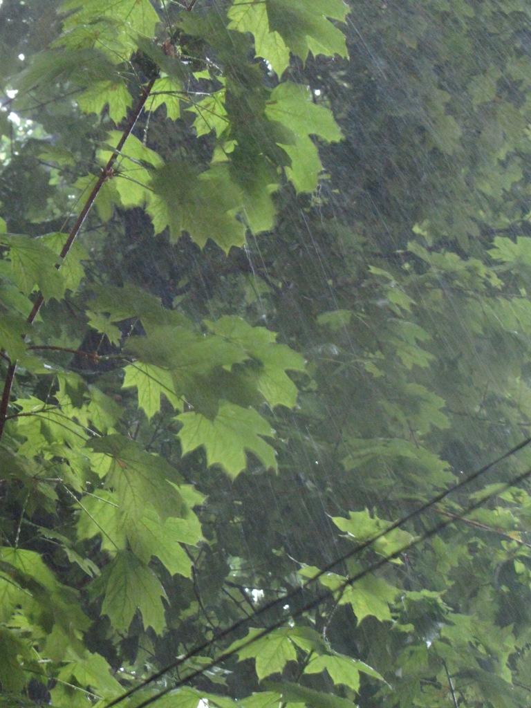 Майский дождь в Одессе. Тропический ливень в Украине.