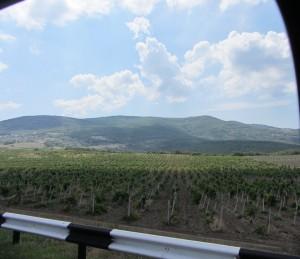 Из крымского винограда делают самое лучшее вино в мире.