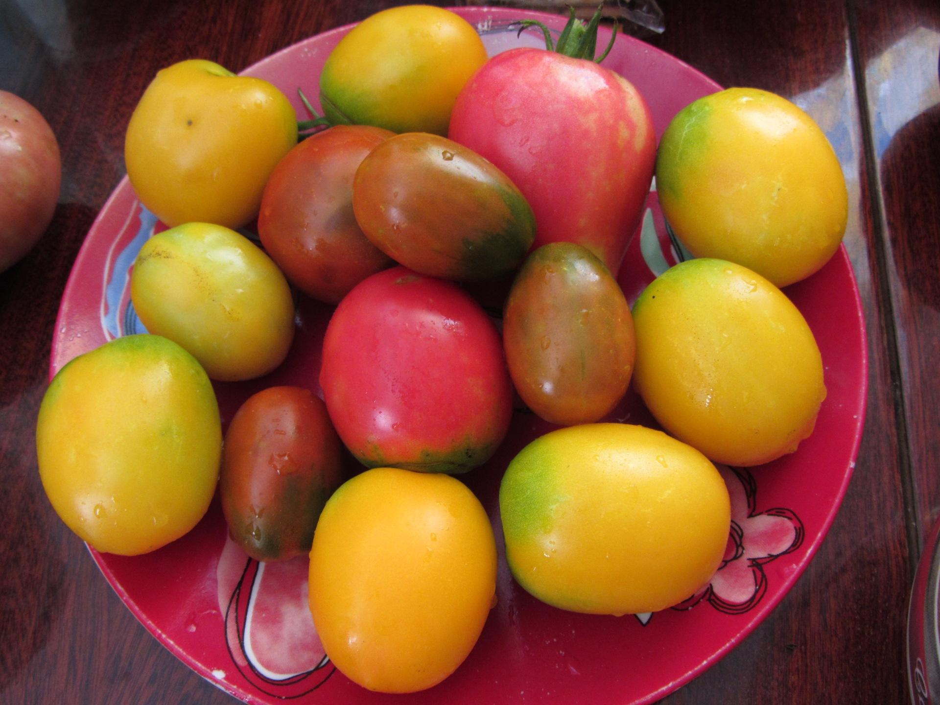 Вред красных помидоров, С чем сочетаются помидоры, Помидоры опасны для здоровья,