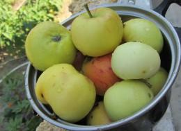 Вред яблочных семечек, Польза яблок, Польза яблок на ночь, Яблоки при похудении,