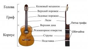 Строение акустической гитары для начинающих
