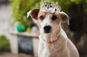 Лучшие собаки для дома и квартиры