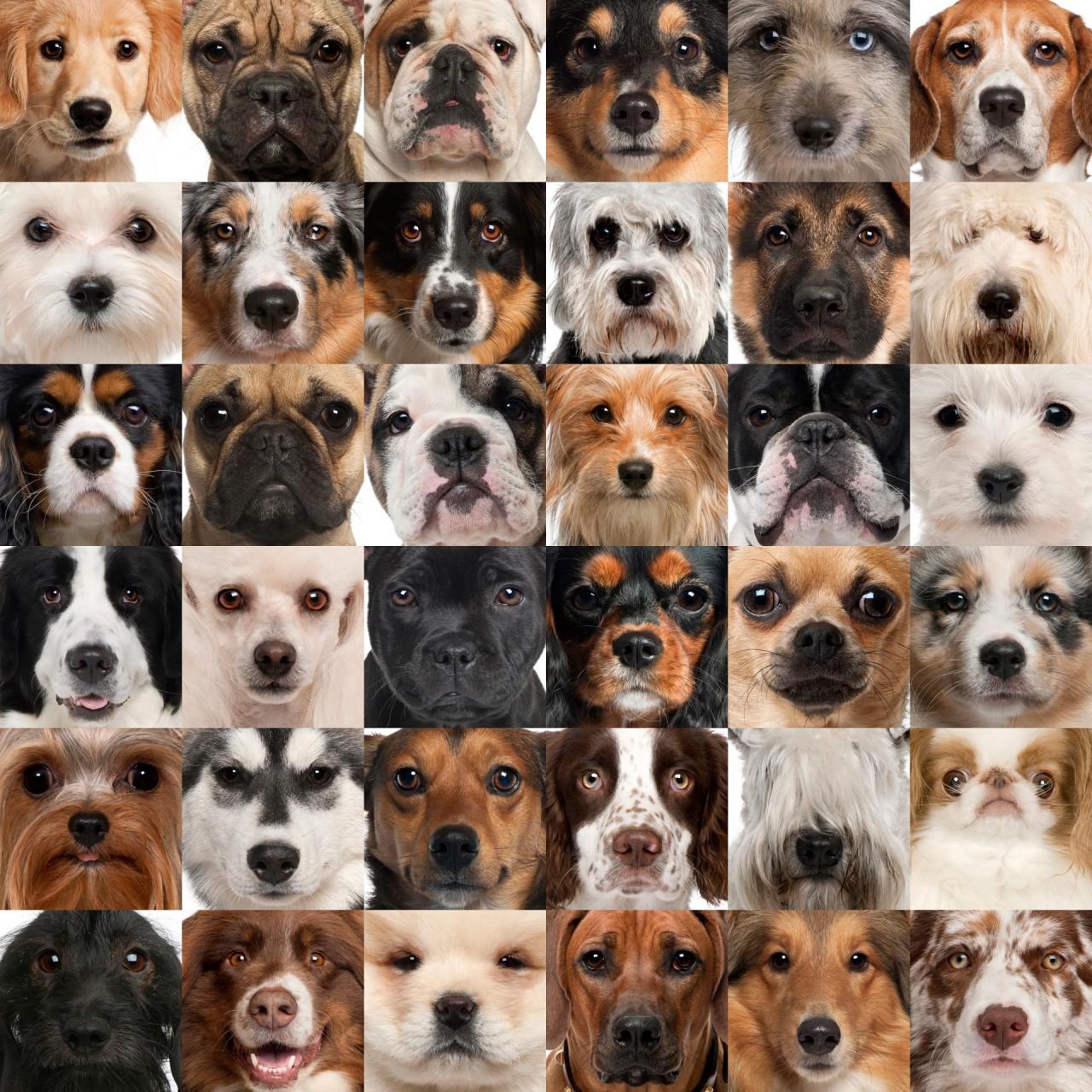 Самые маленькие породы служебных собак, Маленькие пород собаки для ребенка, Самые популярные маленькие породы собак, Самые ласковые и добрые породы домашних собак, Лучшие породы маленьких собак для дома.