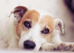 Домашние собаки и дети, Идеальная собака для квартиры, Правила обращения с собакой.