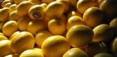 Лечение болезней соком лимона, Лимонный сок для укрепления волос и ногтей, Лимон с чесноком польза, Лечебные свойства лимонного сока,