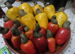 Кажу бразильский фрукт из семян которого делают кешью