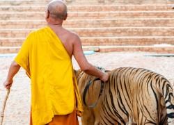 Монах с тигром на поводке,
