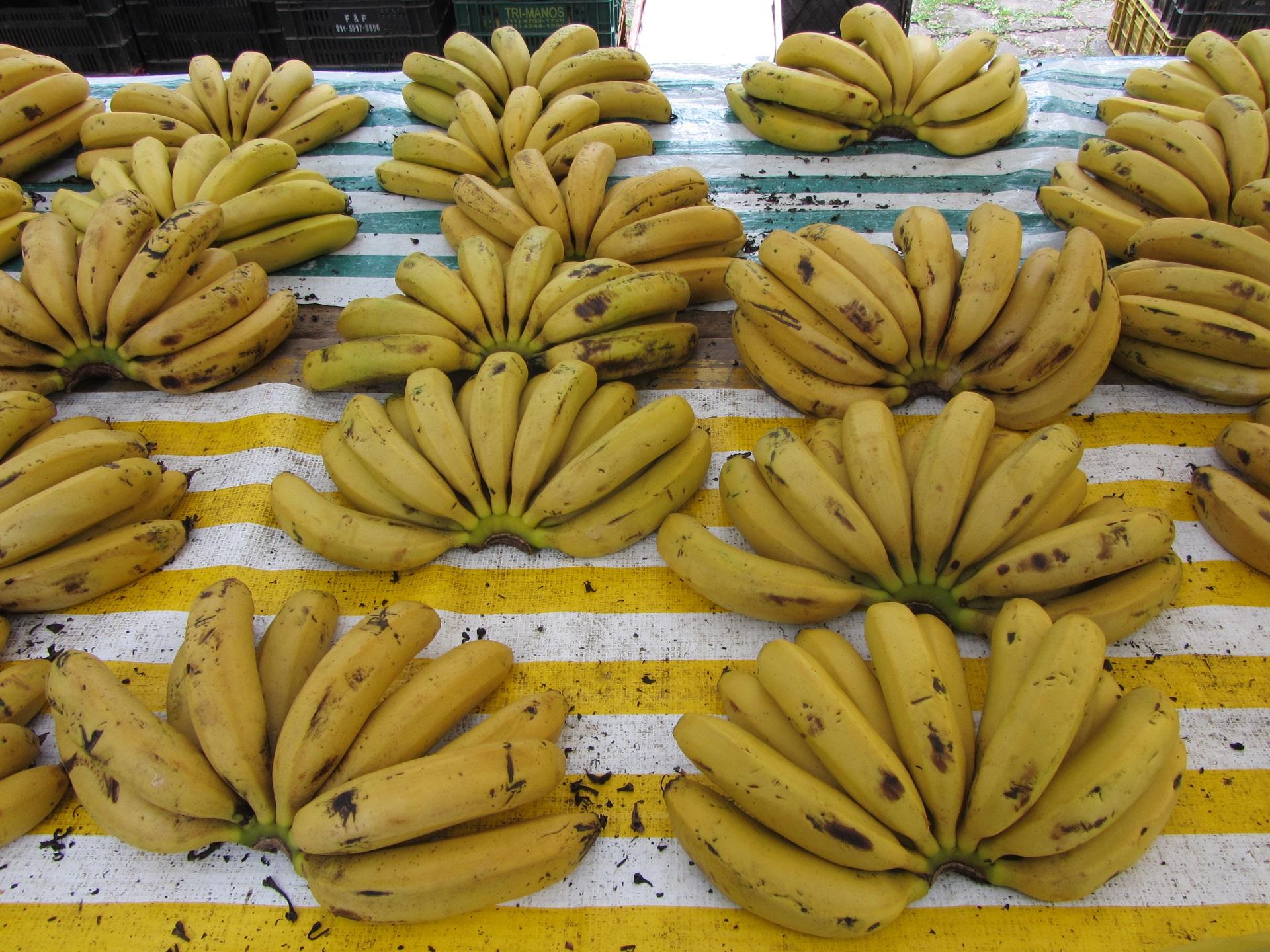 Рассказы жена банан и я фото 784-860