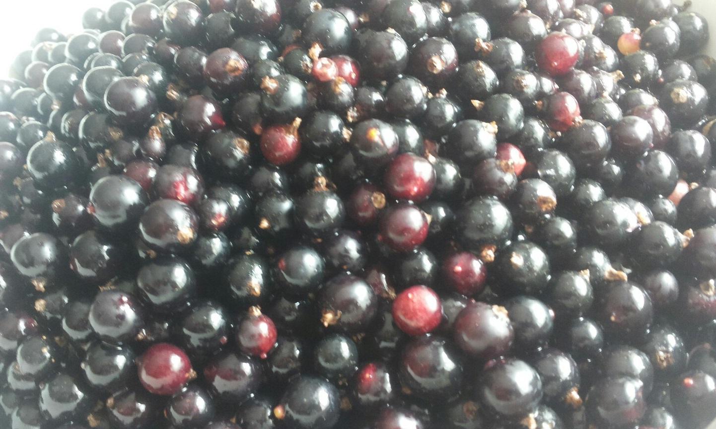 Польза почек черной смородины, Польза листьев черной смородины, Лечебные свойства, Польза ягод черной смородины, Вред ягод черной смородины.