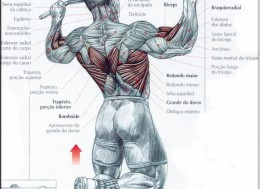 Какие мышцы задействованы во время подтягиваний на турнике, Какие группы мышц работают при подтягивании,