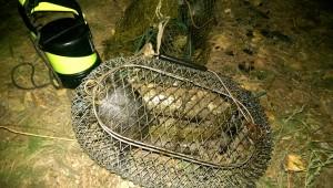 заныр в Орель, улов на реке Орель, подводная охота и рыбалка, zanyr v orel 2015