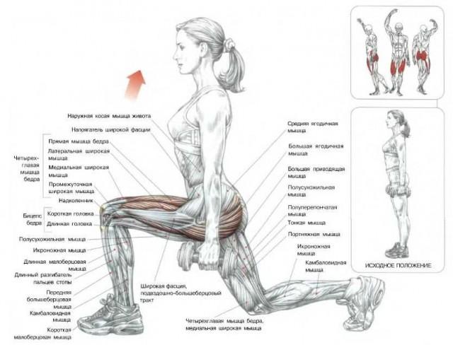 как накачать ягодицы в домашних условиях, тренировка мышц ягодиц, kak nakachat yagodicy