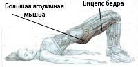 как накачать мышцы ягодиц, тренировка ягодичных мышц, yagodichnye myshcy trenirovka