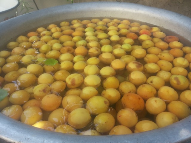 abrikosy v vode