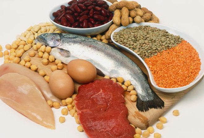 Роль белков в организме человека