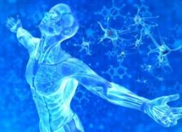 клетки человека