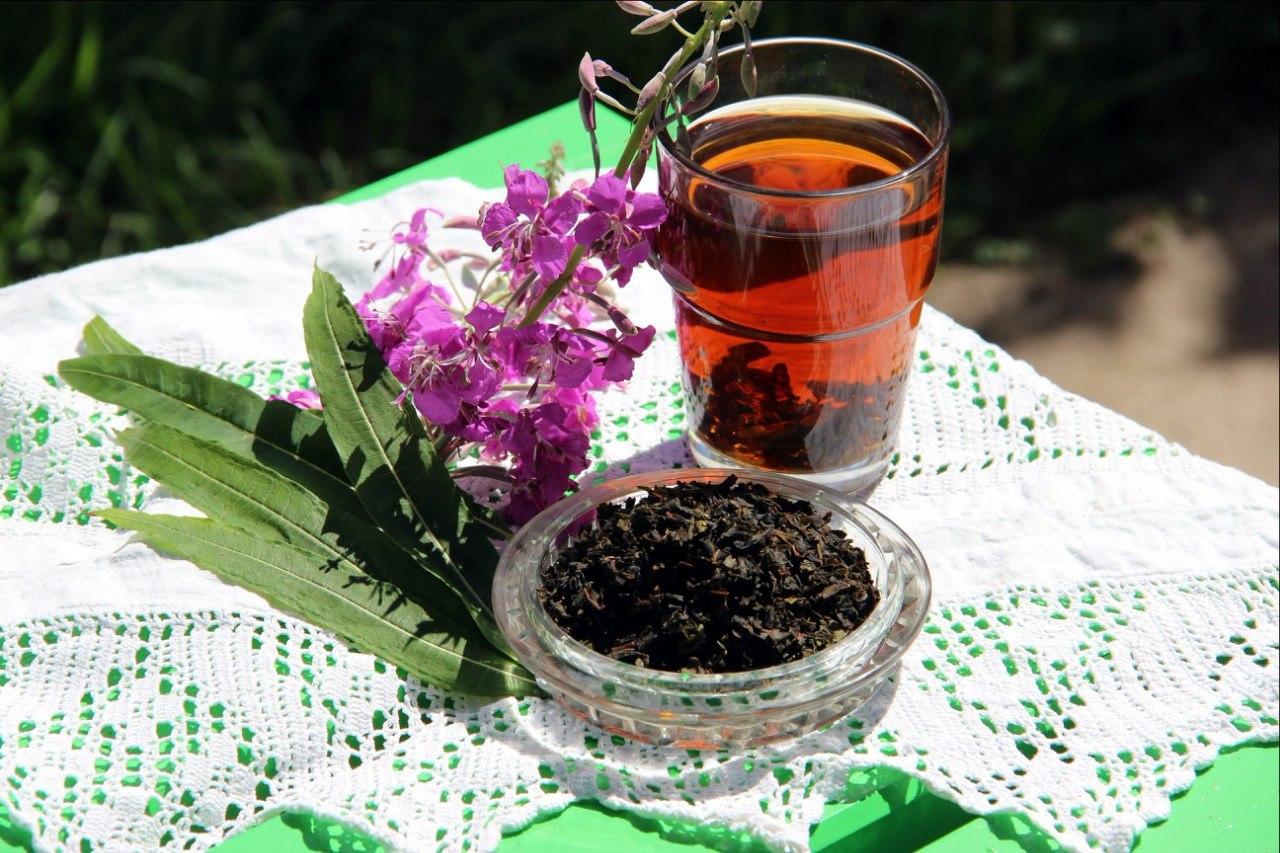 польза и вред иван-чая, иван-чай или кипрей, как правильно заготавливать иван-чай, как заваривать кипрей, польза иван-чая, чай из травы кипрей, польза иван-чая для мужчин, польза иван-чая для женщин, состав кипрея