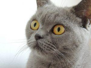 Топ-15 признаков, что кот любит вас